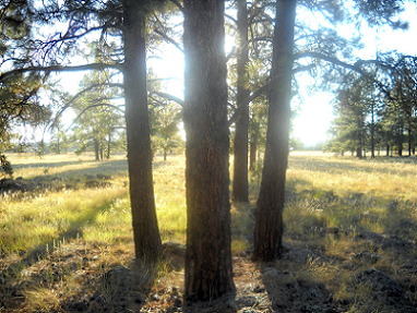Flagstaff sits up in the mountains and is the home of the largest ponderosa pine forest in the country. Come enjoy the San Francisco Peaks and the many outdoor adventures in our area.